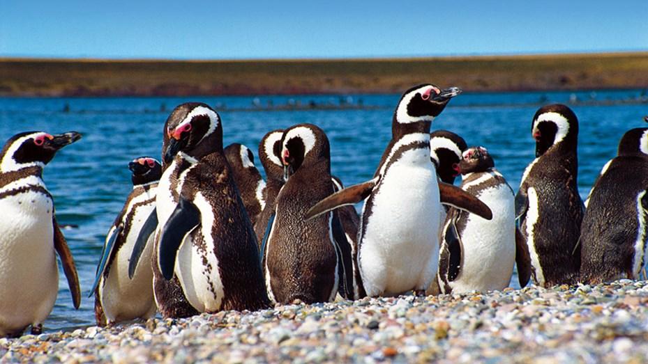 Un millón de pingüinos en Punta Tombo - Telefe Mar del Plata