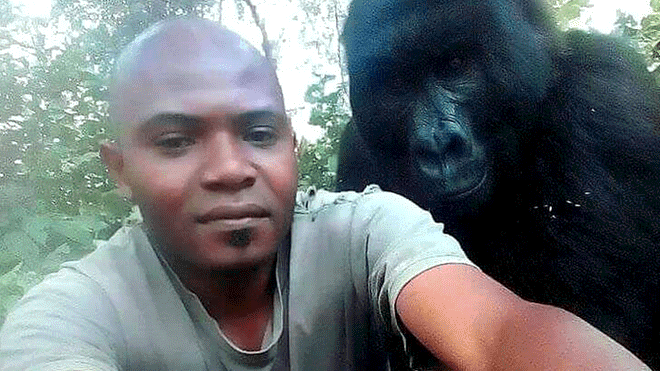 La imagen que ha dado la vuelta al mundo — Selfie con gorilas