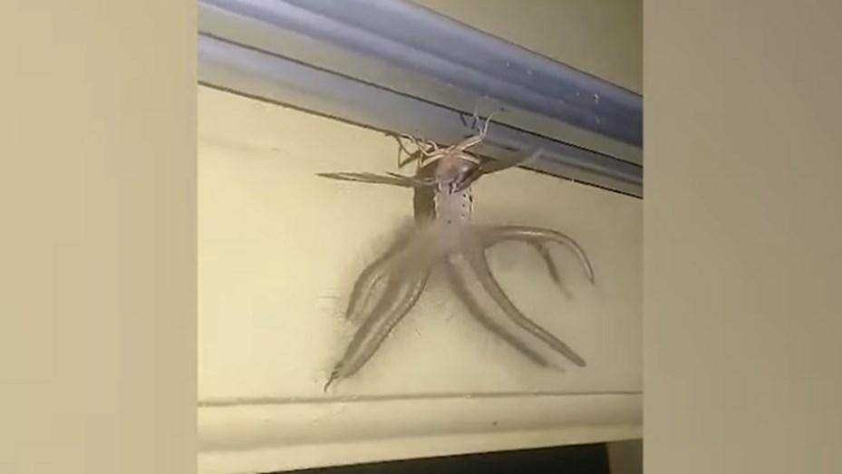 La Extrana Criatura Que Aparecio En Una Casa Tiene Alas Y