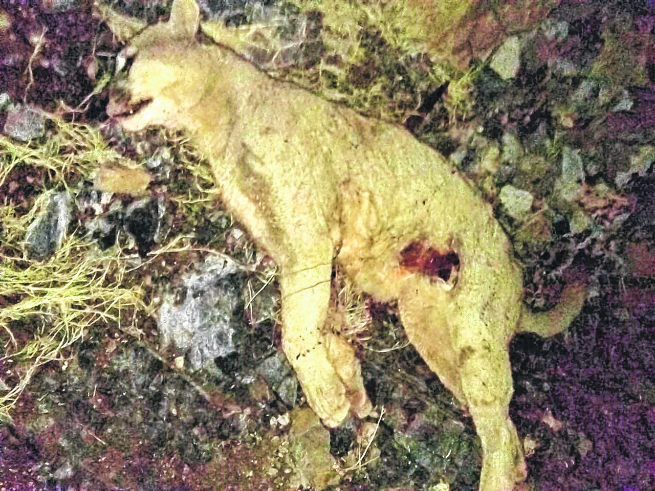 Un campesino fue rescatado tras enfrentarse con un puma — Río Negro