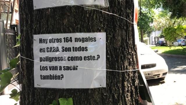 Demoran a vecina que se encadenó para resistir la tala del árbol de su vereda - Telefé Noticias
