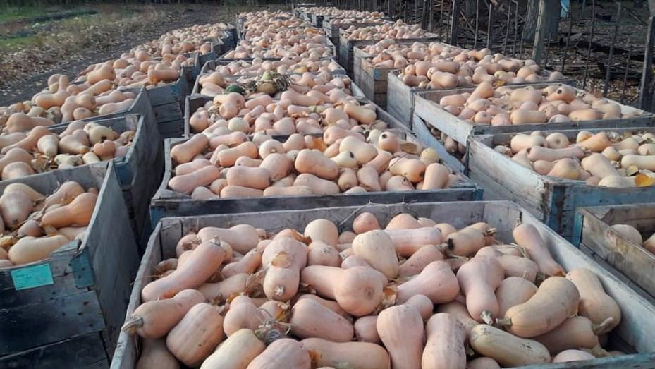 El Centro de Formación Agropecuaria de Plottier produjo 45 ...