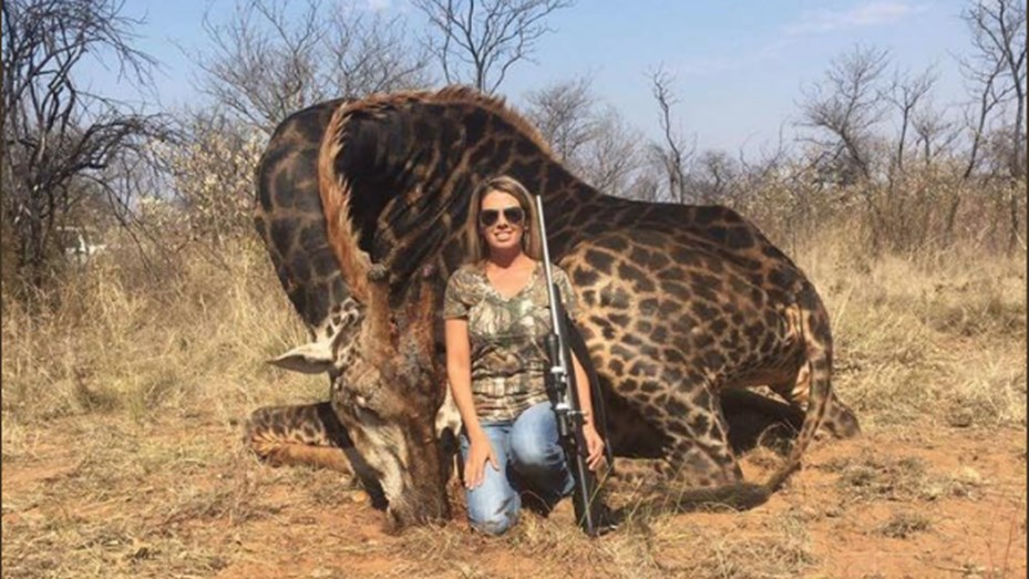 bfe2965fa50 Indignación mundial por una mujer que cazó una jirafa negra y lo ...